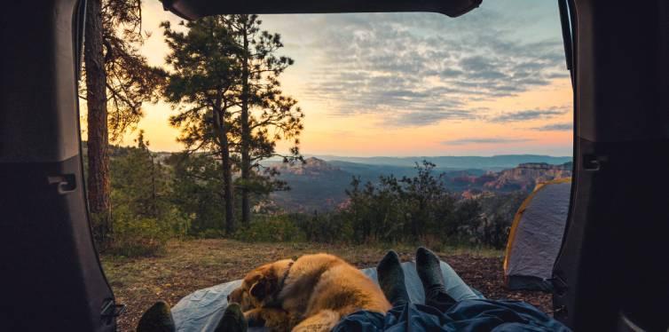 chien heureux camping qui dort dans sa tente