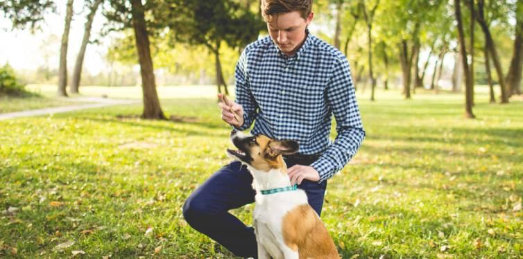 un homme qui dresse son chien