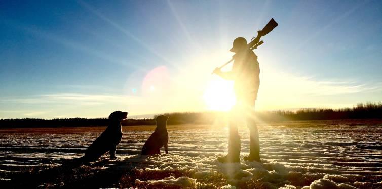 chasse avec deux chiens