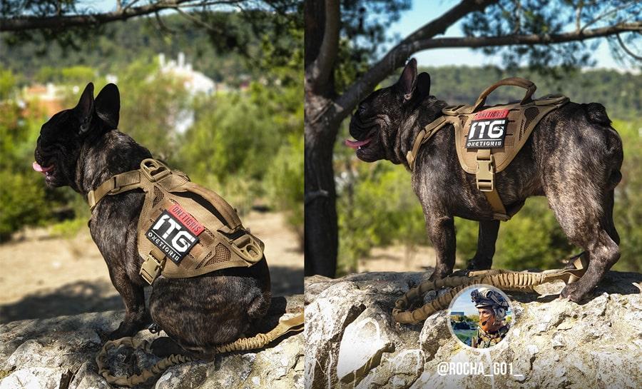un chien en provence militaire